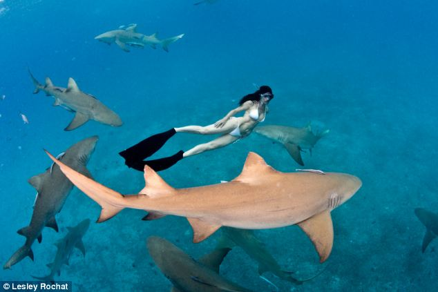 Naked With Sharks:  Is she crazy?!